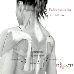 Skulder og rygg illustrasjon anatomi